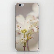 White Dog Wood iPhone & iPod Skin