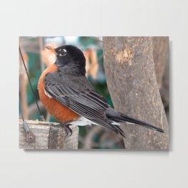 Bird balance Metal Print