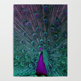 BLOOMING PEACOCK Poster