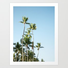 For the love of palmtrees | Dominican republic travel photography print Art Print