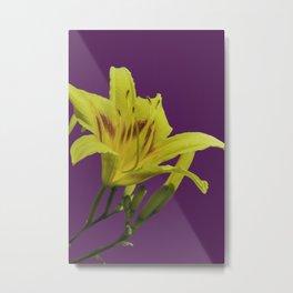 Flores amarillas Hemerocallis del campo Metal Print