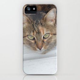 Brown Cat Glance iPhone Case