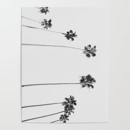 Black & White Palms Poster