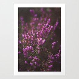 Purple Little Flowers in My Garden Art Print