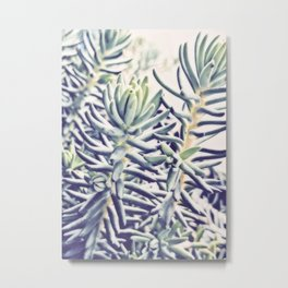 Sunday Morning Succulents Metal Print