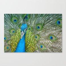 Pretty Blue Peacock Canvas Print