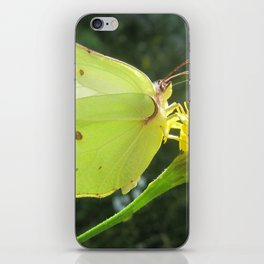Brimstone butterfly and yellow flower iPhone Skin