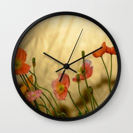 Colorful poppies in evening light Wall Clock