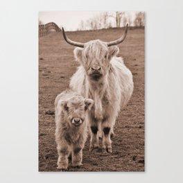 Scottish Highlander Momma and Baby Canvas Print