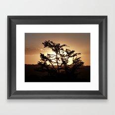 Sunset through acacia tree Framed Art Print