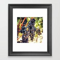 Napa Valley Grapes Framed Art Print