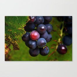 Ripe Red Grapes Fruit Canvas Print