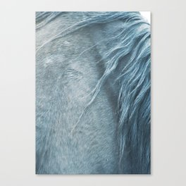 Wild horse photography, fine art print of the mane, for animal lovers, home decor Canvas Print