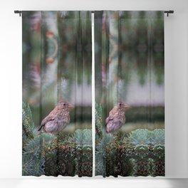 Backyard Visitor ~ I Blackout Curtain