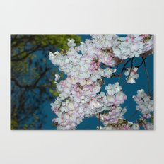 Underneath A Cherry Tree Canvas Print