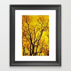 Morning Tree's Framed Art Print