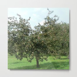 Apple trees Metal Print