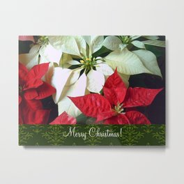 Mixed Color Poinsettias 2 Merry Christmas S6F1 Metal Print