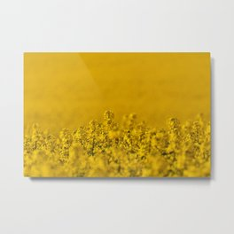 Bright yellow rapeseed blossoms & field - rural landscape photograph Metal Print