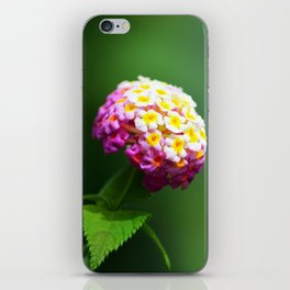Toxic and Invasive, but Oh So Pretty iPhone Skin