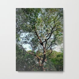 Creepy Tree from Ride Queue Metal Print