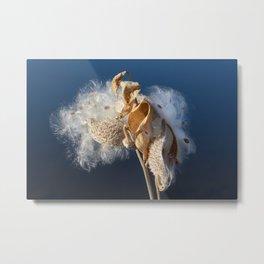 Autumn Milkweed Metal Print