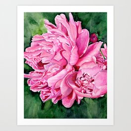 Pink Peony Watercolor Art Print