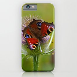 Peacock Butterfly on a Teasel Flower 4 iPhone Case