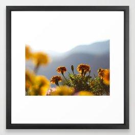 Flowers at Sunrise Framed Art Print