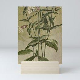 Vintage Botanical Print - Evening Lychnis Mini Art Print