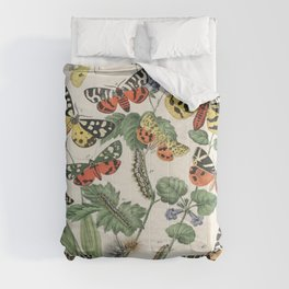 Vintage Scientific Illustration Butterfly Botanical Floral Lithograph Encyclopaedia Diagrams  Comforters