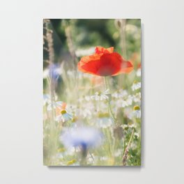 Colorful Flower Bed In Spring Photo | Flower Photography | Daisies And Poppies Metal Print