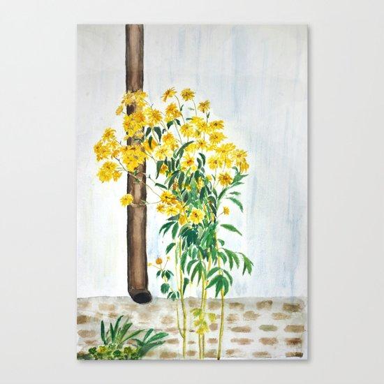 sun choke flowers outside a house Canvas Print