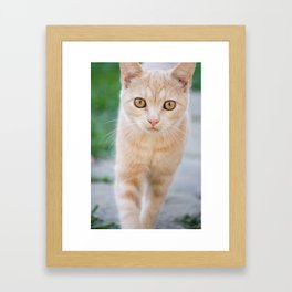 Esmeralda The Kitty Framed Art Print