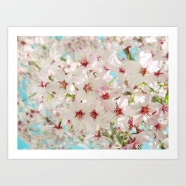 Cherry Blossom afternoon Art Print