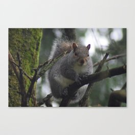 Bright Eyed & Bushy Tailed Canvas Print
