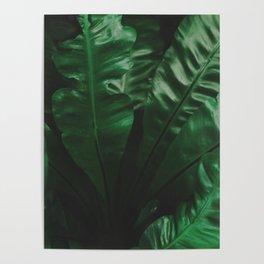 Dark green leaves Poster