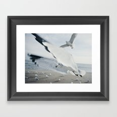 Seagull {Six} Framed Art Print
