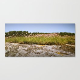 Koster's flowers Canvas Print