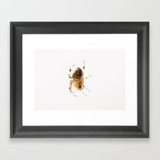 Little Spider Framed Art Print