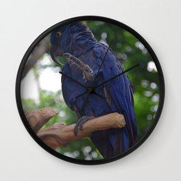 National Aviary - Pittsburgh - Hyacinth Macaw 2 Wall Clock