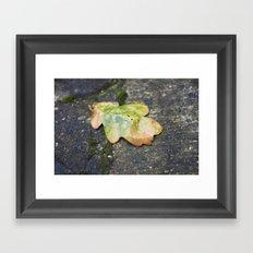 Beauty In The Rain Framed Art Print
