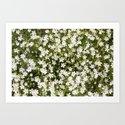 Stitchwort Stellaria Wild Flowers by markuk97
