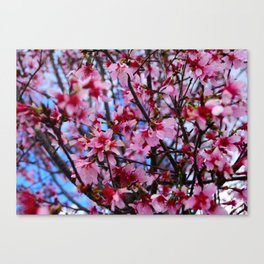 Beauty distorted  Canvas Print