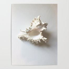 Conch Still Life Poster