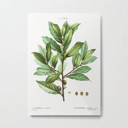 Bay laurel (Laurus nobilis) from Traité des Arbres et Arbustes que l'oncultive en France en pleine t Metal Print