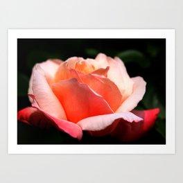 Rose in my Garden Art Print