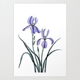 vintage purple iris watercolor Art Print