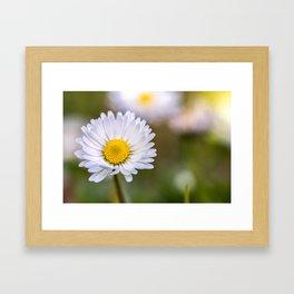 Colourful daisy flower Framed Art Print