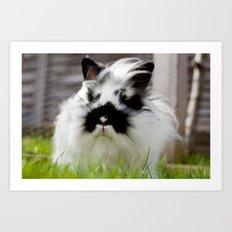 Sooty Bunny. Art Print